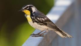 Rare Bird Alerts?
