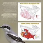Birding-Article.pdf